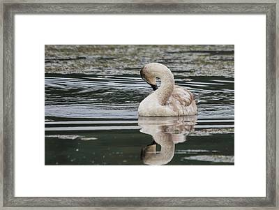 Young Reflection  Framed Print