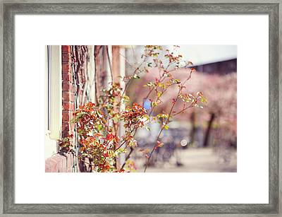 Young Rose Branches In Spring. Amsterdam Framed Print by Jenny Rainbow