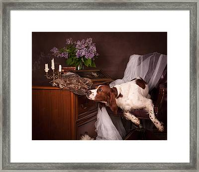 Young Setter With Lilac... Framed Print