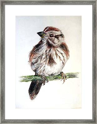 Young Sparrow Framed Print