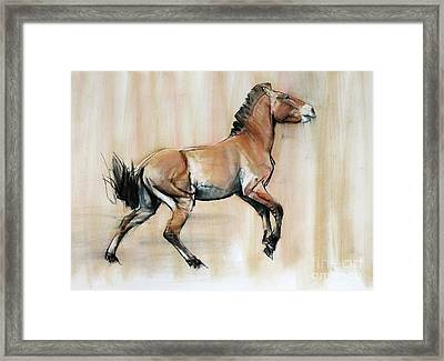 Young Stallion Framed Print