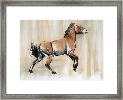 Young Stallion Framed Print by Mark Adlington
