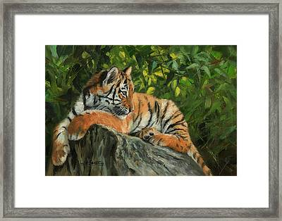 Framed Print featuring the painting Young Tiger Resting On Rock by David Stribbling