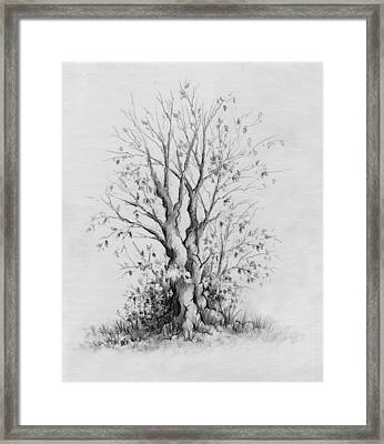 Young Tree Framed Print by Rachel Christine Nowicki