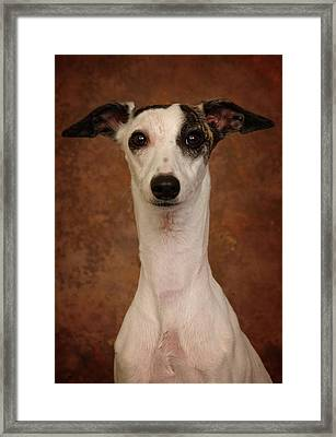 Framed Print featuring the photograph Young Whippet by Greg Mimbs