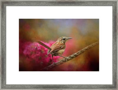 Young Wren In The Garden Framed Print