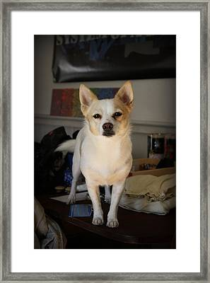 Your Attention Please Framed Print by Mandy Shupp