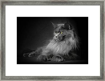 Framed Print featuring the photograph Your Majesty. by Robert Sijka