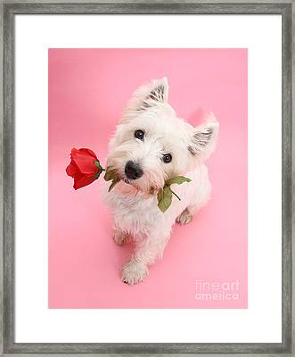 Your Valentine Every Day Framed Print
