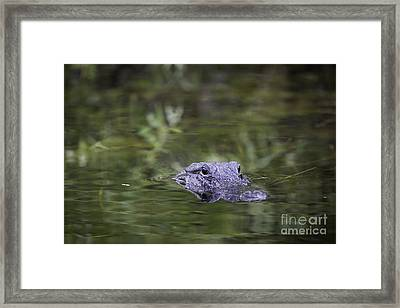 You're Being Watched Framed Print by Brian Jannsen