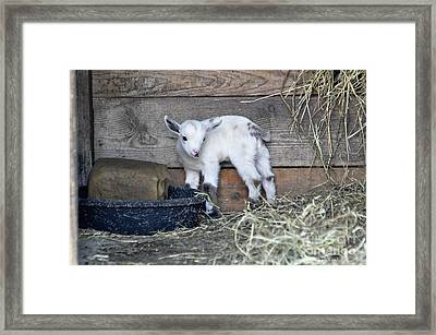 You're Kidding Me Framed Print by Diane E Berry