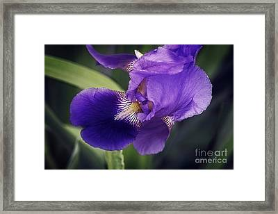 Lost In The Moment Framed Print by Lucinda Walter