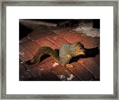 You're Nuts Framed Print by Jamie Lindenmeier