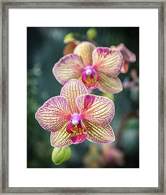 Framed Print featuring the photograph You're So Vain by Bill Pevlor