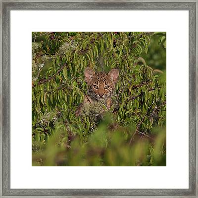 Youthful Innocence Framed Print by Ronnie Maum