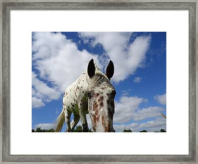You've Been Spotted Framed Print