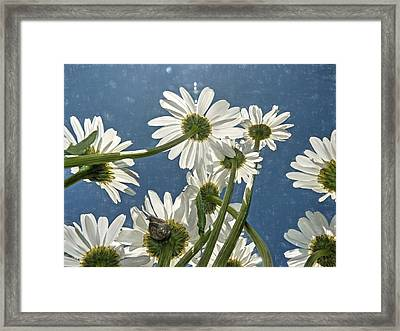Framed Print featuring the photograph You've Got Snail by Donna Kennedy