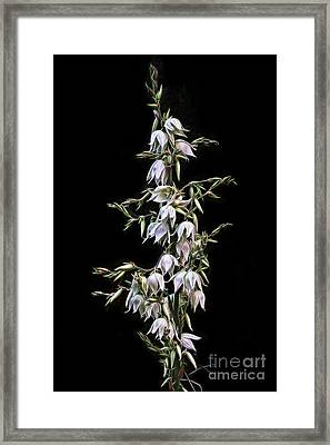 Yucca Art Framed Print by Ann Garrett