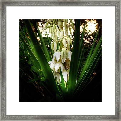 Yucca In The Woods Framed Print