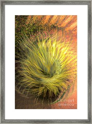 Yucca Lace Framed Print by Georgianne Giese