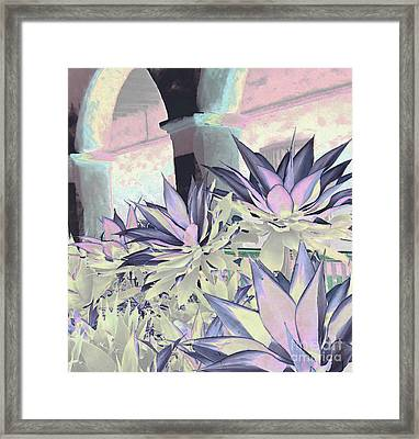 Yucca Light Framed Print by Ann Johndro-Collins