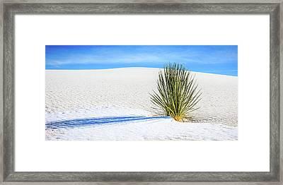 Yucca Framed Print by Marla Hunt