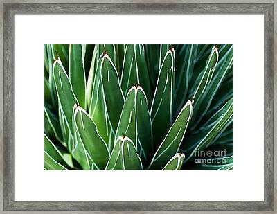 Yucca Patterns No. 1 Framed Print