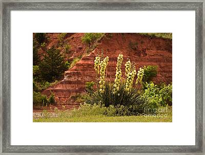 Yucca Plant At Great Salt Plains Lake Oklahoma Framed Print by Fred Lassmann
