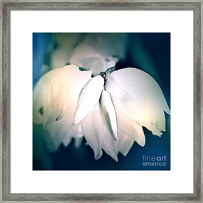 Yucca Plant Flowers Cool Tones Framed Print
