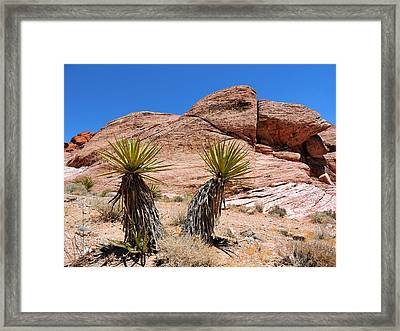 Yucca Plants Framed Print by Connor Beekman