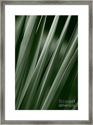 Yucca Spikes Framed Print by Jeannie Burleson