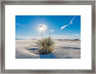 Yucca Sunburst - White Sands National Monument Photograph Framed Print by Duane Miller