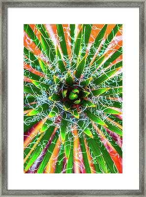 Framed Print featuring the photograph Yucca Sunrise by Darren White
