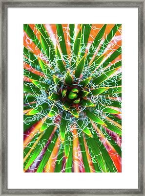 Yucca Sunrise Framed Print by Darren White