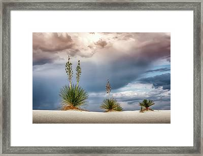 Yucca Three Framed Print