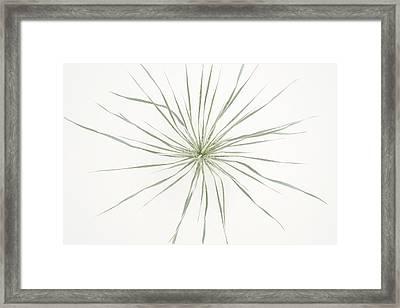 Yucca Whorl - White Sands National Monument Framed Print