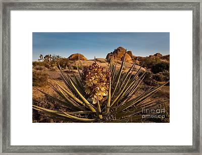 Yucca Bloom Framed Print