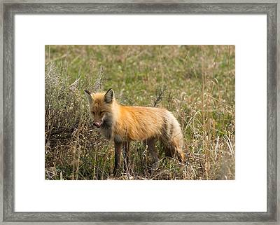 Yum Framed Print by Birches Photography