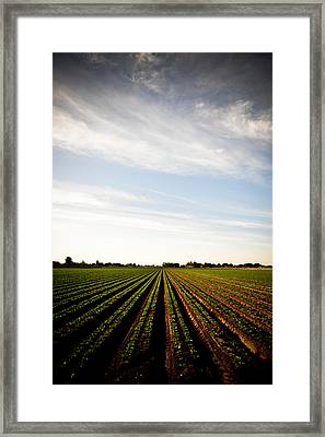 Yuma Fields  Framed Print by Scott Sawyer
