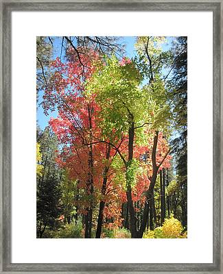 Yummy Fall Colors Framed Print by Sandy Tracey