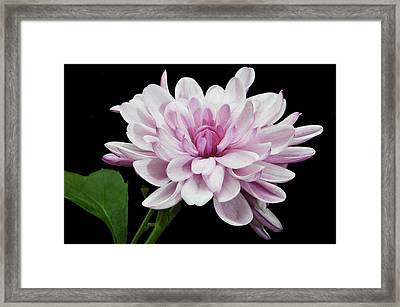 Framed Print featuring the photograph Yummy Mummy by Terence Davis