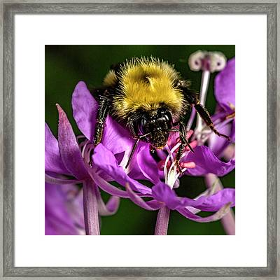 Framed Print featuring the photograph Yummy Pollen by Darcy Michaelchuk