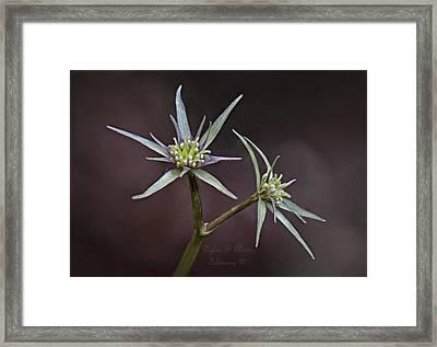 Yvette Framed Print
