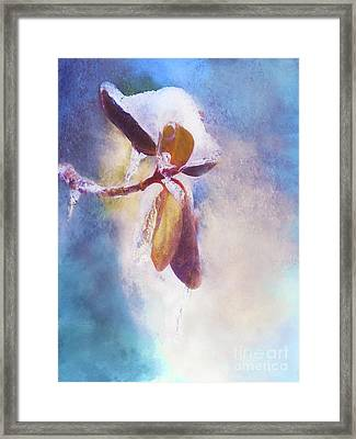 Winter Abstract - Snow And Ice On Rhododendron Leaves Framed Print