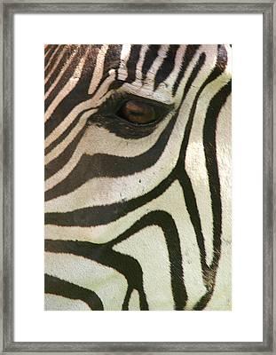 Z-eye Framed Print by Donald Tusa