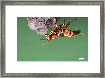 Zapp Framed Print