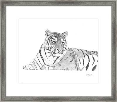 Zarina A Siberian Tiger Framed Print by Patricia Hiltz