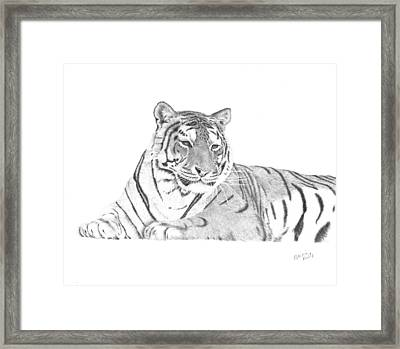 Zarina A Siberian Tiger Framed Print