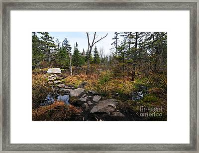 Zealand Trail  Framed Print by Catherine Reusch Daley