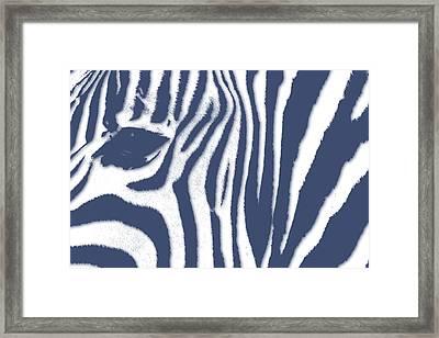 Zebra 2 Framed Print by Joe Hamilton